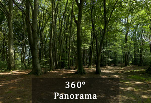 360 Grad Panorama: Wald